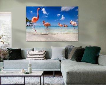 Flamingo's up close and personal  van Vivianne Molenaar-Seinen