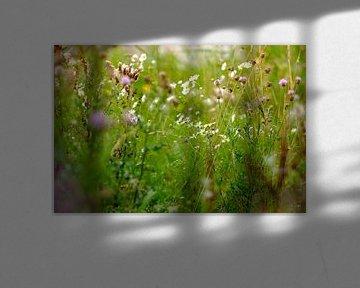 Wilden Blumen von Arjen Roos