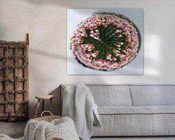 Rosa Tulpen im Kreis von Cora Unk