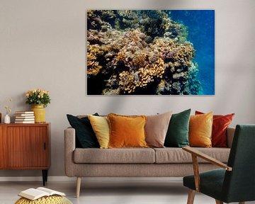 koraal gebied von John van Weenen