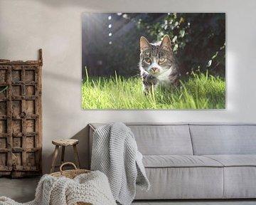 Spielerische Katze im Gras sur Elisabeth Eisbach