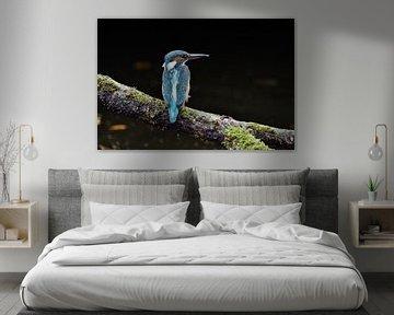 Ijsvogel met zwarte achtergrond von Jan van Vreede