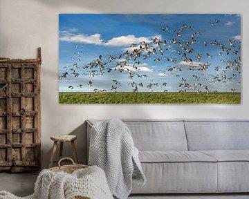 Een vlucht ganzen boven het natuurgebied De Wadden von Harrie Muis