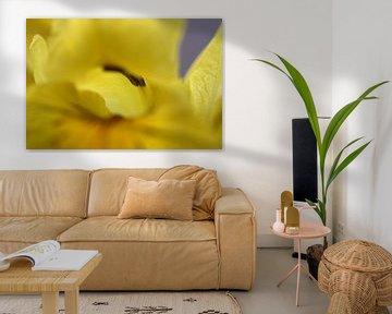 Sumpf-Schwertlilie 2 von Lisette Tegelberg - Zegwaard