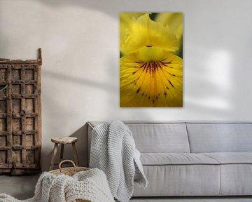 Sumpf-Schwertlilie von Lisette Tegelberg - Zegwaard