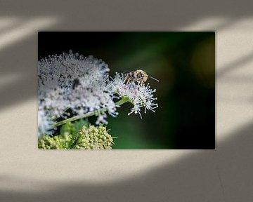 Makro eines Insekts auf einer weißen Blume von Marc Goldman