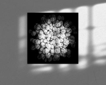 closeup van een bloem in knop in zwart-wit von Marc Goldman