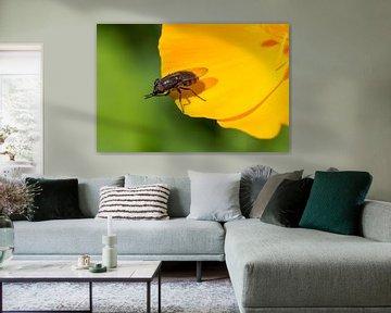 Makro eines Insekts auf einer gelben Blume von Marc Goldman