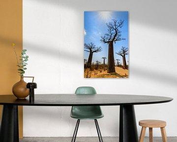 Baobab tegenlicht van Dennis van de Water