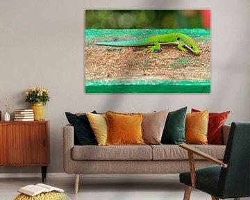 Madagaskar daggekko von Dennis van de Water