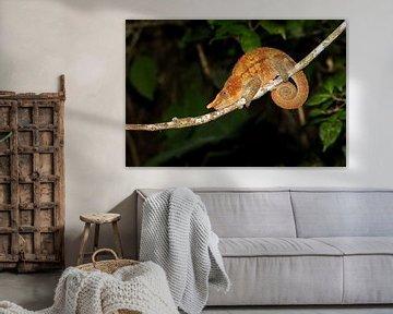 Parsons Kameleon von Dennis van de Water