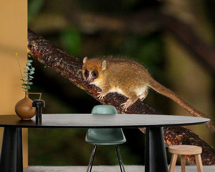 Beispiel fototapete: Madagaskar Muismaki von Dennis van de Water