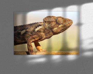 Kameleon portret von Dennis van de Water