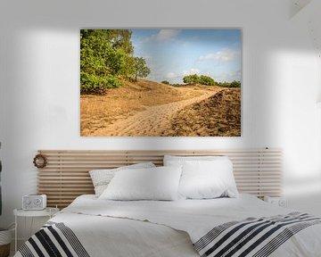 Sentier de sable dans une réserve naturelle néerlandaise sur Ruud Morijn