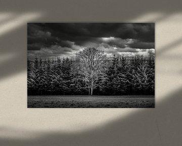 Mutterbaum von Wilderlicht