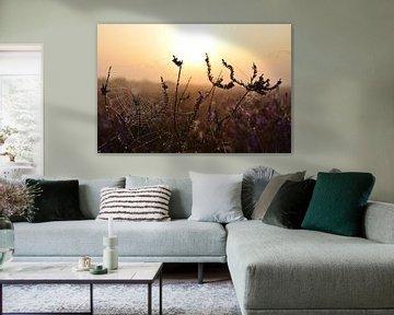 Spinnenweb bij zonsopkomst, Westerheide, Hilversum van Danielle Bosschaart