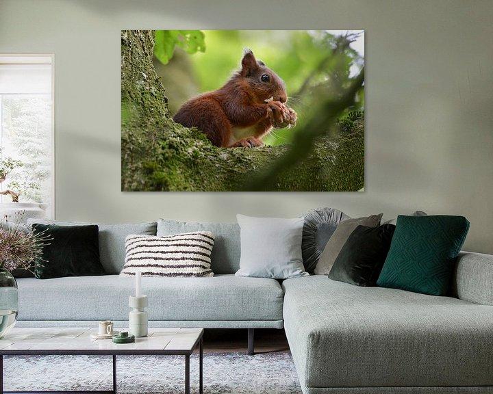 Beispiel: etende eekhoorn von Pascal Engelbarts