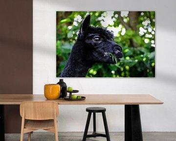 Etende Alpaca von Michel Van Zanten