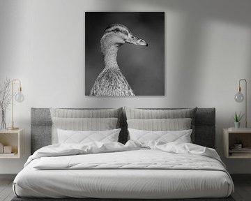 Wilde eend zwart-wit portret von Michel de Beer
