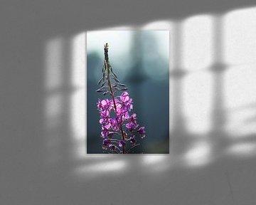 Paarse bloem von Miranda Rijnen Fotografie