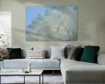 Drawn By Nature, Paeonia - Pioenroos wit #003 van Peter Baak