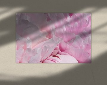 Drawn By Nature, Paeonia - Pioenroos roze #001 van Peter Baak