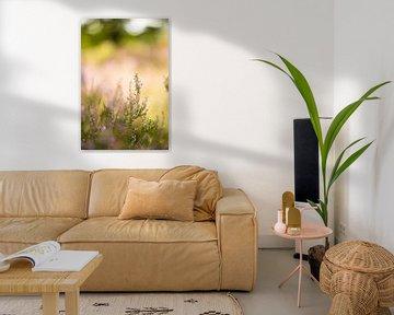 Bloeiende heide met zonnige achtergrond von Marianne Rouwendal