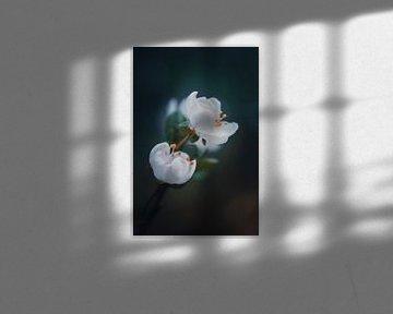 Bloesem von Miranda Rijnen Fotografie