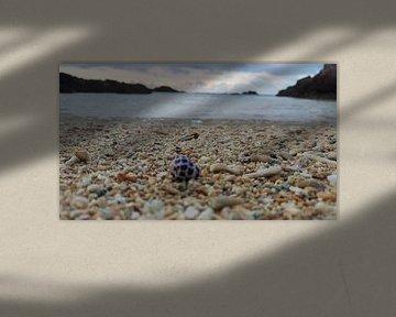 Lonely shell on Okinawa beach van Daniel Chambers