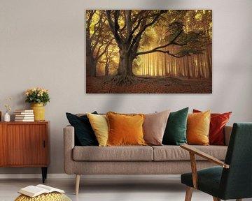 Art of nature.... van Piet Haaksma