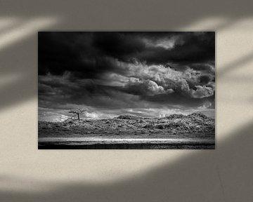 Schoorlse Duinen national park van Alessia Peviani