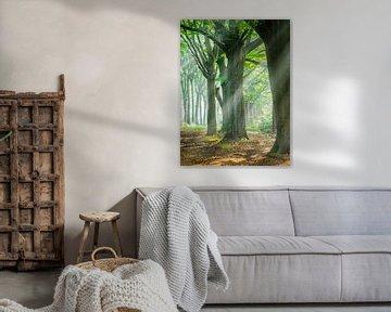 Zonnestralen tussen de bomen van Henk Goossens