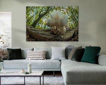 Porseleinzwam in het Speulderbos van Gerry van Roosmalen