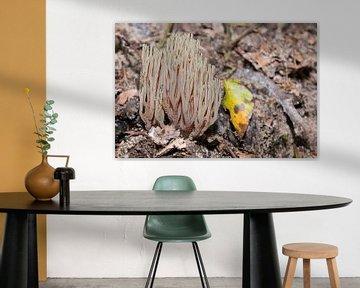 Witte koraalzwam van Peter Bartelings Photography