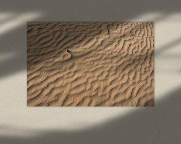 Ribbels en patronen - Loonse en Drunense Duinen van Laura Vink