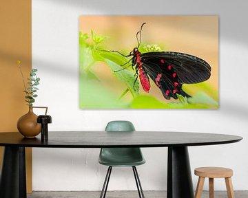 Page Papillon noir et rouge sur Samantha Schoenmakers