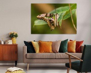 Papillon de page coloré sur Samantha Schoenmakers