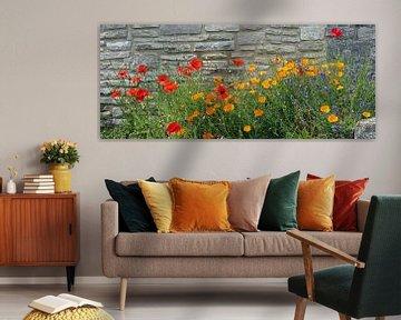 poppy flowers against natural stone wall van Susanne Bauernfeind