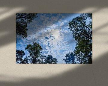 Lente in de lucht! van E. Blaauwwiekel