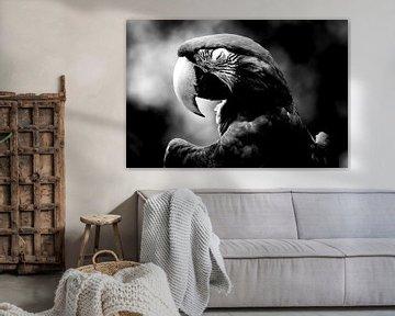 Papagei von Studio Heyki