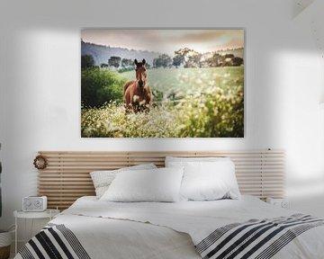 Bruin paard bij zonsondergang van Sharon Zwart