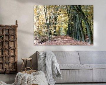 Herfst laan von Robert de Jong
