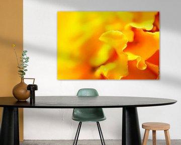 Makro foto von einer gelben Blume mit einem Unschärf effekt von Jacqueline Groot