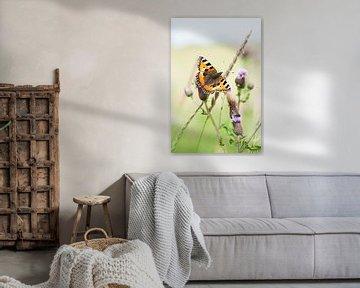 Photo du petit renard, papillon sur la plante du chardon sur Jacqueline Groot