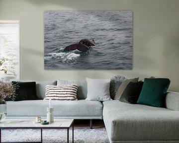 Humpback Whale van Rene Jacobs