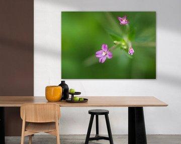 Rising flowers von Geert Symoens
