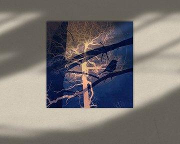 Nachtvogel von Vera Laake