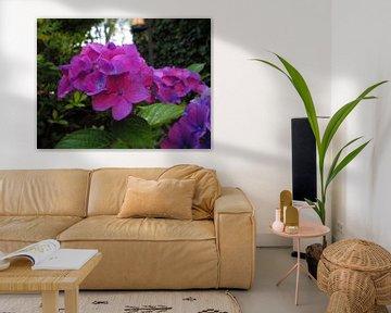 This is a Flower of my home Garden von Wilbert Van Veldhuizen