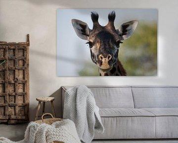 Giraffenporträt von Robin Langelaar