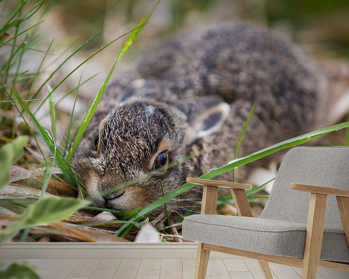 Sfeerimpressie behang: Wild baby konijntje in het gras van Dexter Reijsmeijer